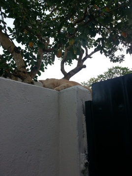 Useless security cat